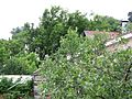Die Kirsche - panoramio.jpg