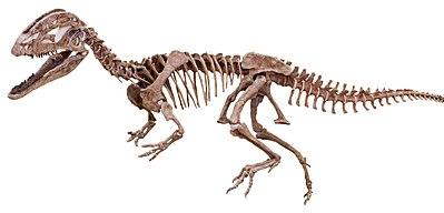 Dilophosaurus sinensis - MUSE.jpg