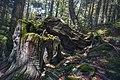 Dirfis woods.jpg