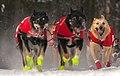 Dog team run by Ed Stielstra (8529501993).jpg