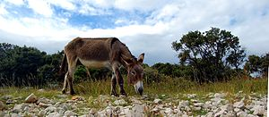 Donkey 04.jpg