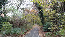 Downham Woodland Walk 3.JPG