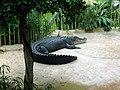 Dresdner zoo krokodilmax.jpg