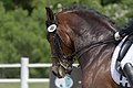 Dressage horse's perspective (27362981482).jpg