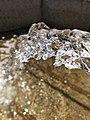 Eau de puit, eau de vie.jpg