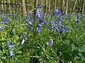 Ecomare - boshyacinten (boshyacinten-2550-rw).jpg