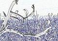 Egret Tree (15232003644).jpg