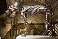 Elephant skeleton (26098607278).jpg