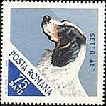 English-Setter-Canis-lupus-familiaris Romania 1965.jpg