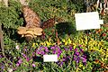 Epcot bee and butterfly.jpg