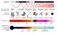 Espectro Eletromagnético.png