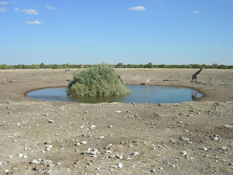 File:Etosha National Park, Namibia (2855235517).jpg
