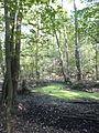 FFM Stadtwald Rohsee Nordteil 1.jpg