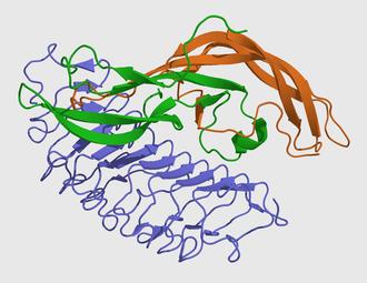 Follicle-stimulating hormone - Image: FSHA+B+receptor 1XWD