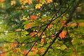 Fall in Muskoka (2921286264).jpg