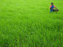 Major crop areas in India: R