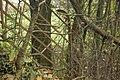 Fence at the Glannau - geograph.org.uk - 1042203.jpg