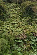 Fern-Covered Cliff (3184506271).jpg
