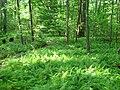 FernBedInForest.jpg