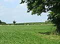 Field west of Kington Lane - geograph.org.uk - 1403969.jpg