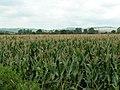 Fields near Nether Exe - geograph.org.uk - 970298.jpg