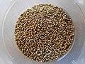 Finger Millet Seed.jpg