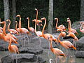 Flamingo party 2.JPG