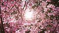 Fleurs de soleil.jpg