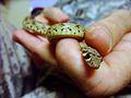 Flickr - DVIDSHUB - Snake Handler.jpg