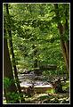 Flickr - Laenulfean - fairy forest.jpg