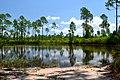 Florida Trail - panoramio (1).jpg