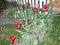 Flowerbed in Illinois 2.jpg