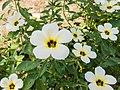 Flowers at Cardamom House (10530382755).jpg
