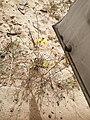 Flowers in Khobar 2.jpg