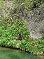 Fonts del riu Glorieta a Mont-ral P1260707.jpg