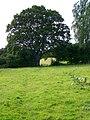 Footpath, Ashton Common - geograph.org.uk - 1437887.jpg