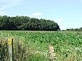 Footpath To Cowper's Wood - geograph.org.uk - 542176.jpg
