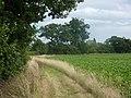 Footpath by beet field - geograph.org.uk - 1451839.jpg