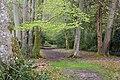 Footpath through Beech woodland south of Minstead House - geograph.org.uk - 781733.jpg