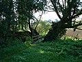 Footpath through the trees. - geograph.org.uk - 247738.jpg