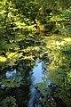 Forêt de Stambruges 07.jpg