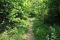 Forêt domaniale de Bois-d'Arcy 12.jpg