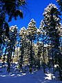 Forest - panoramio (42).jpg