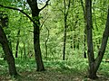 Forest - panoramio - paulnasca (98).jpg