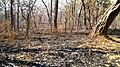Forest Fire @ Wayanad Wildlife Sanctuary, Muthanga Range - panoramio (10).jpg