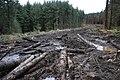 Forest Track, Guisborough Woods - geograph.org.uk - 641637.jpg