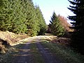 Forest Track Near Little Clyde - geograph.org.uk - 375592.jpg