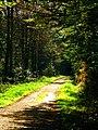 Forest Walk In Autumn - panoramio.jpg