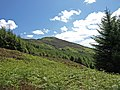 Forest clearing above Loch Chon - geograph.org.uk - 1360112.jpg