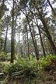 Forest near Bermeo.jpg